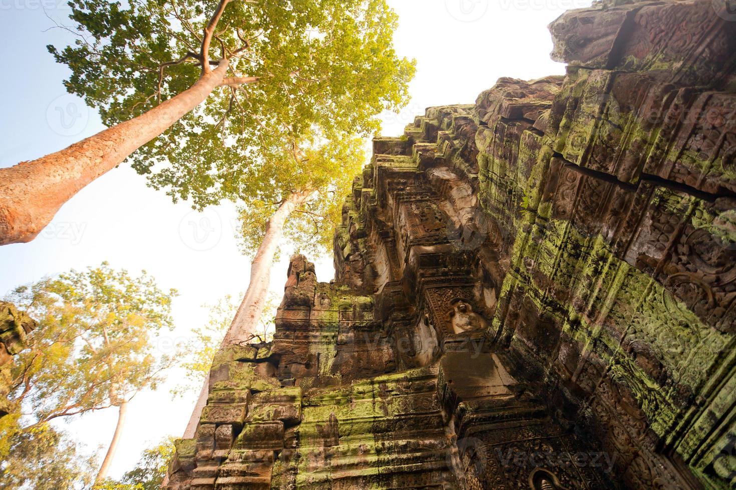 ta prohm-templet, angkor, kambodja foto