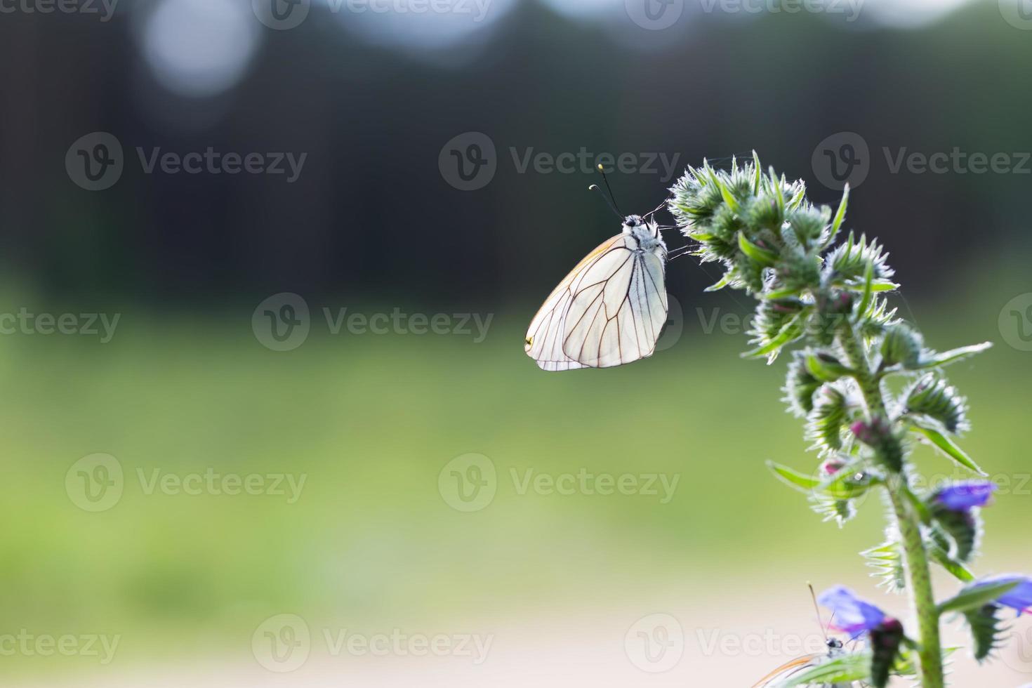 vacker vild färgglad fjäril som vilar på växten foto