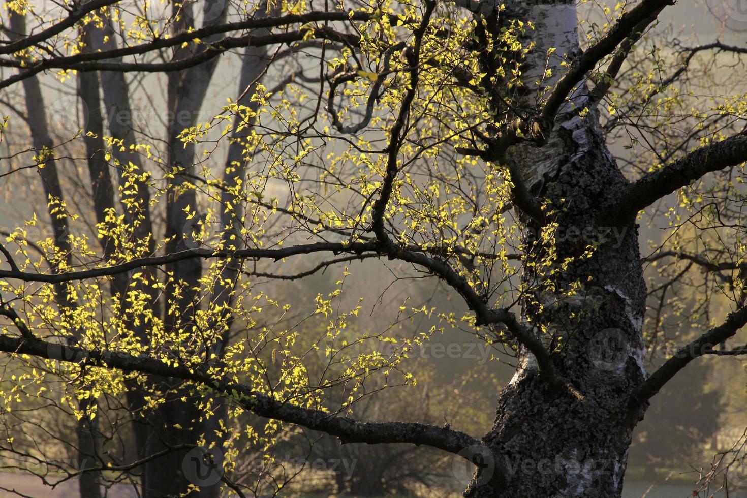 träd på våren vid soluppgång foto