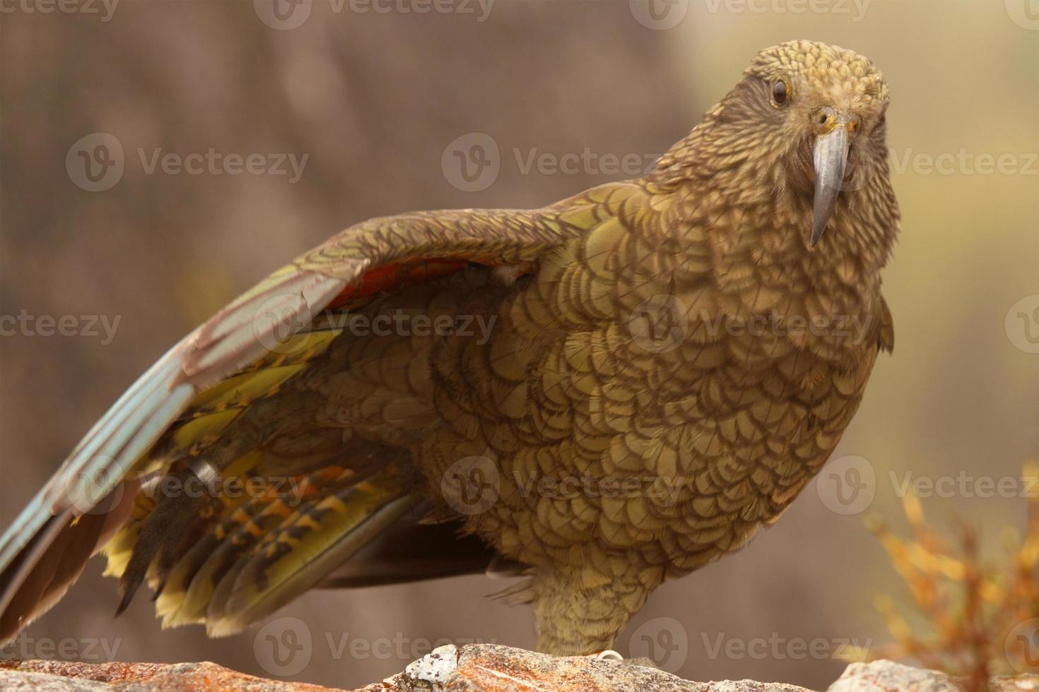 papegoja på ett ben foto