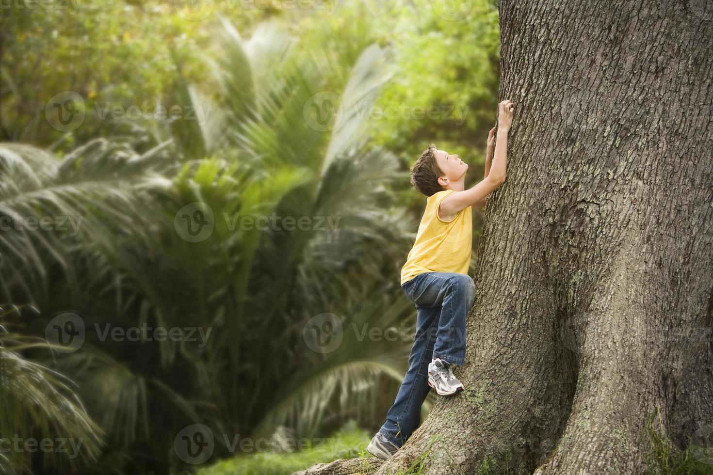 ung pojke som klättrar stort träd foto