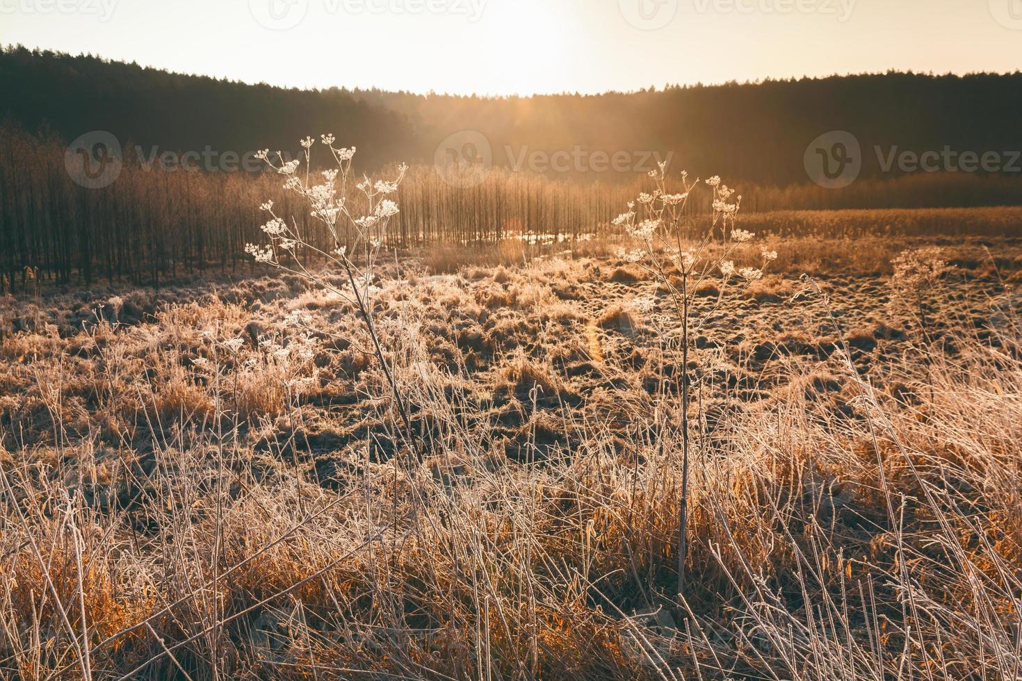 mazury - polen foto
