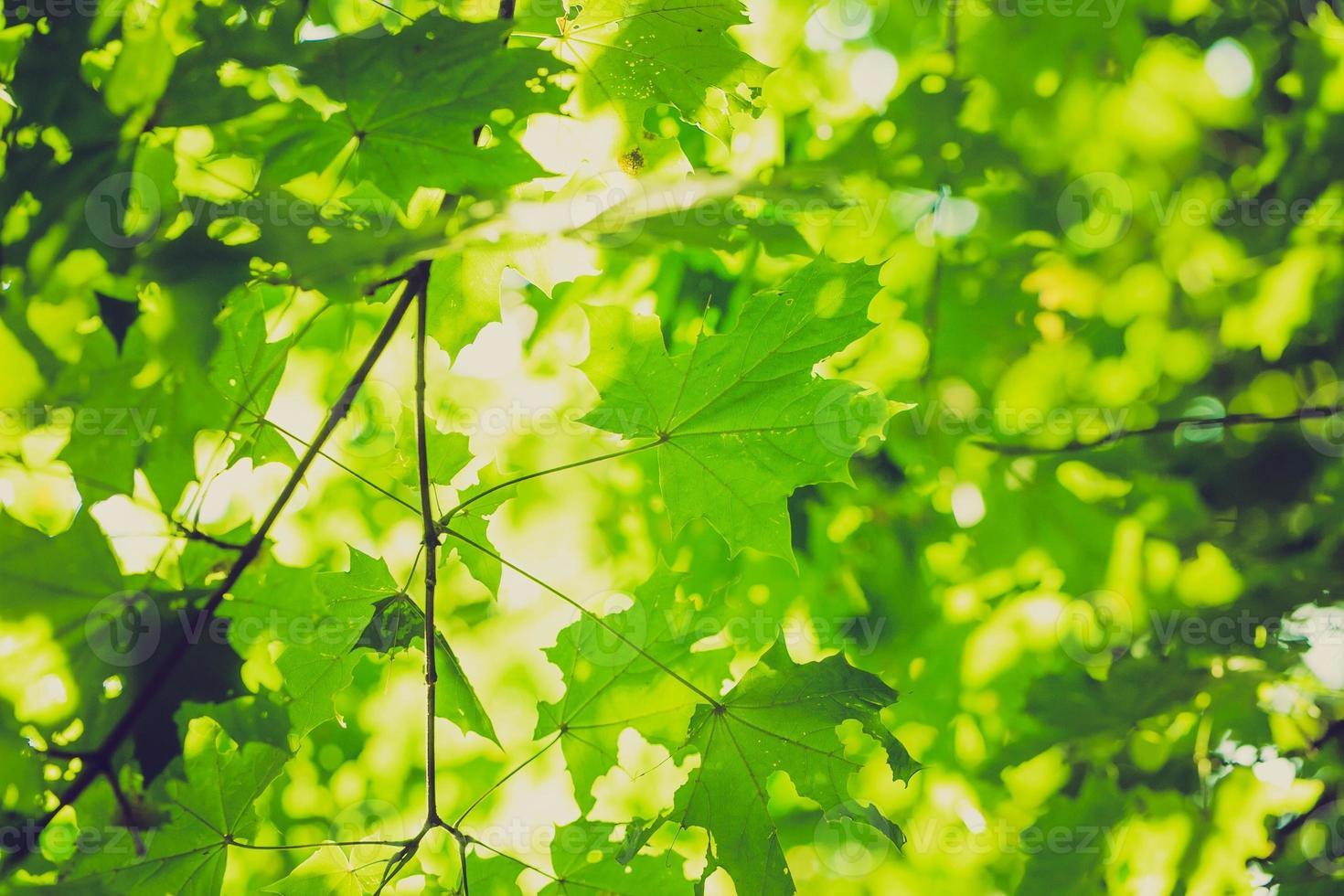 tappningfoto av abstrakt bakgrund av gröna trädgrenar foto
