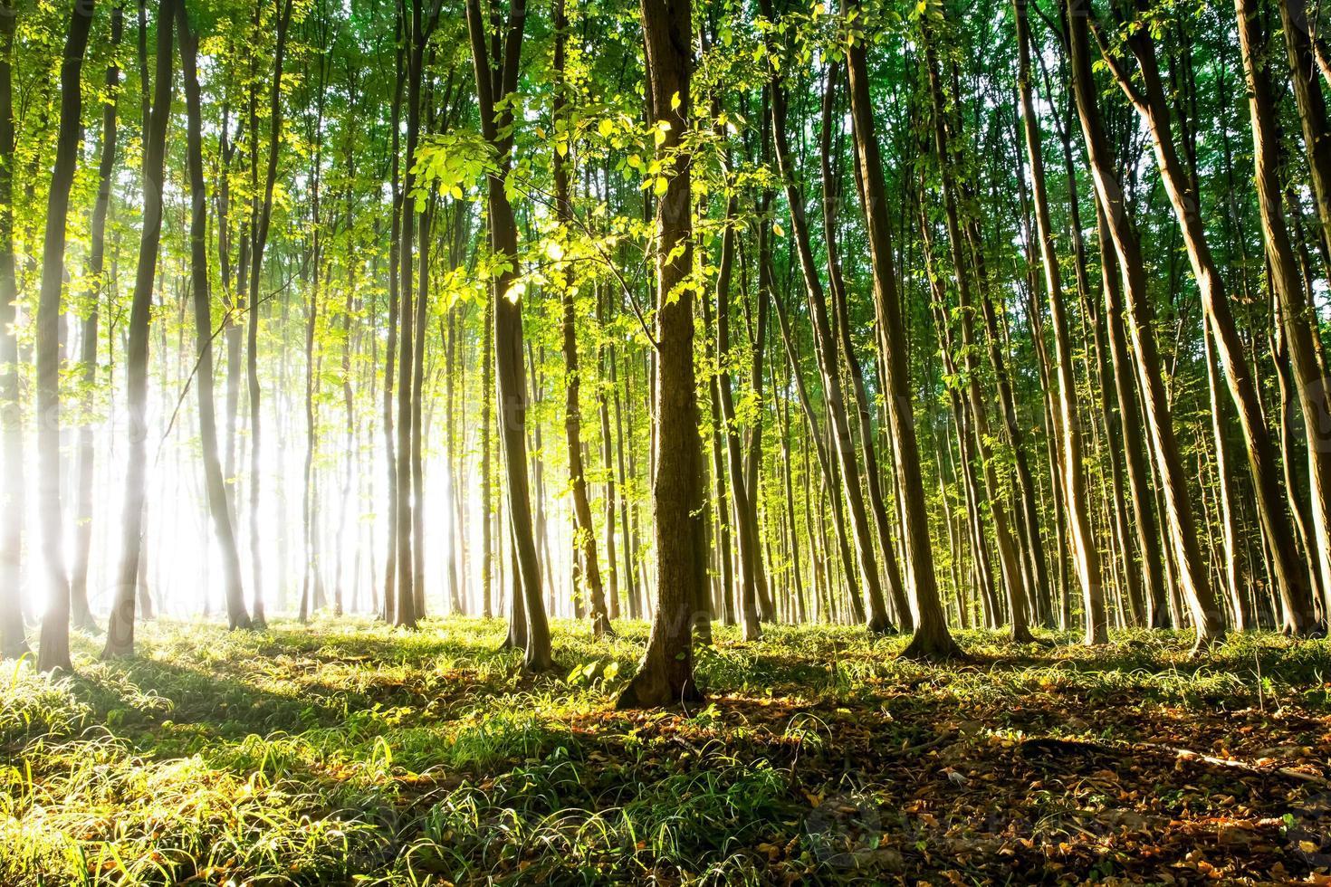 natur. vacker solnedgång i skogen foto