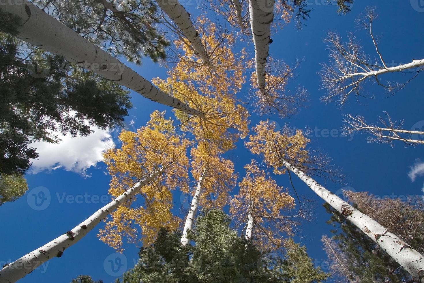 träd och moln. foto