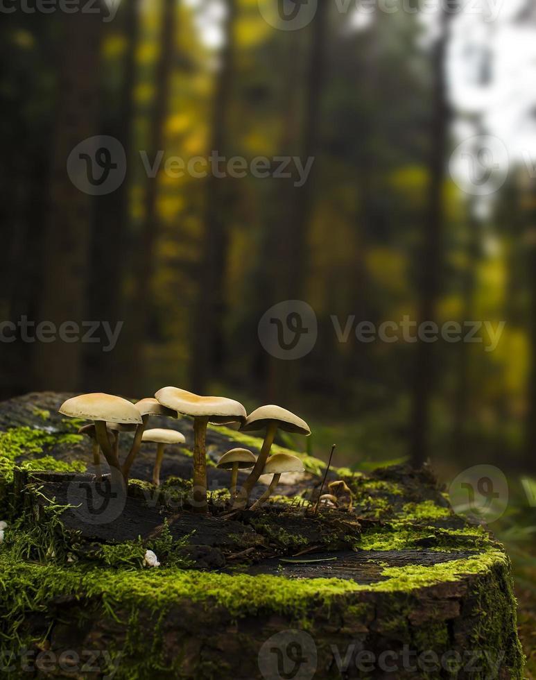 små svampar foto