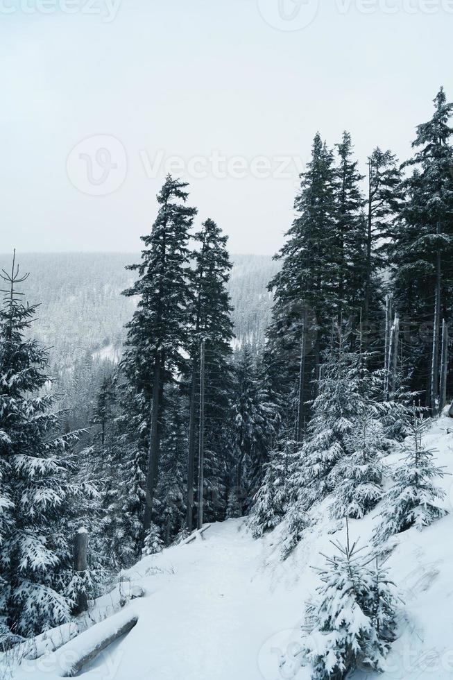europeiska berg - krkonose foto