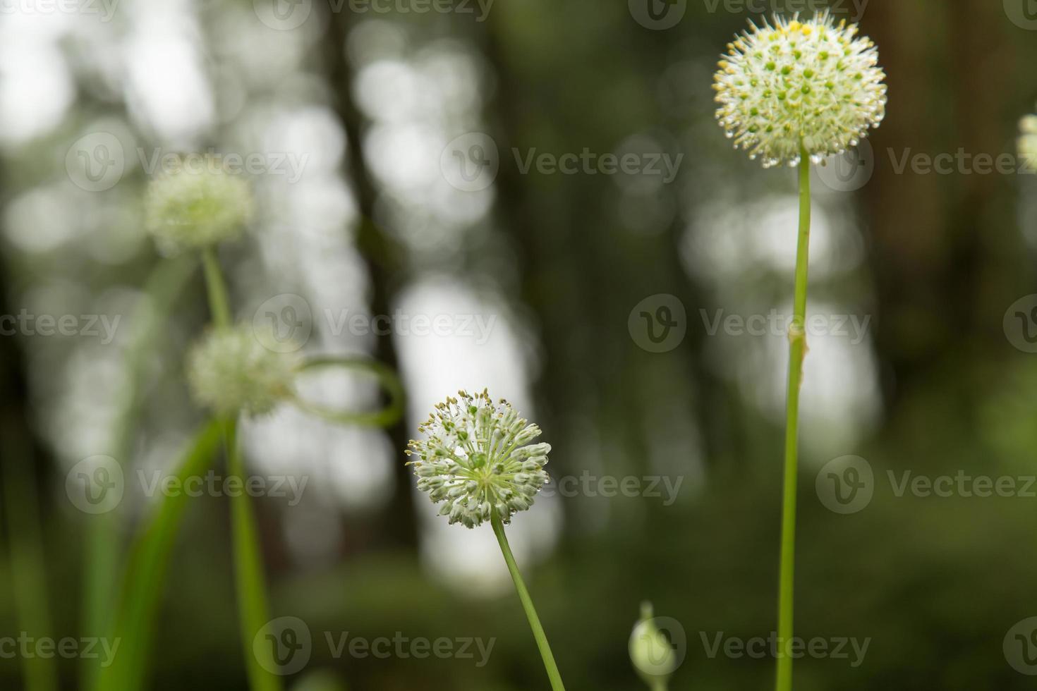 vita blommor. foto