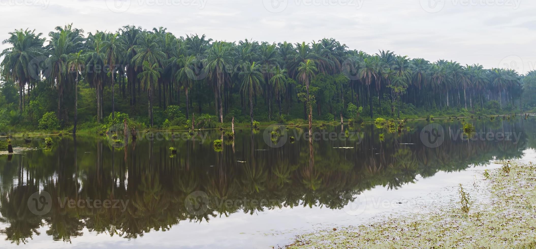 reflektion av oljepalmplantagen foto