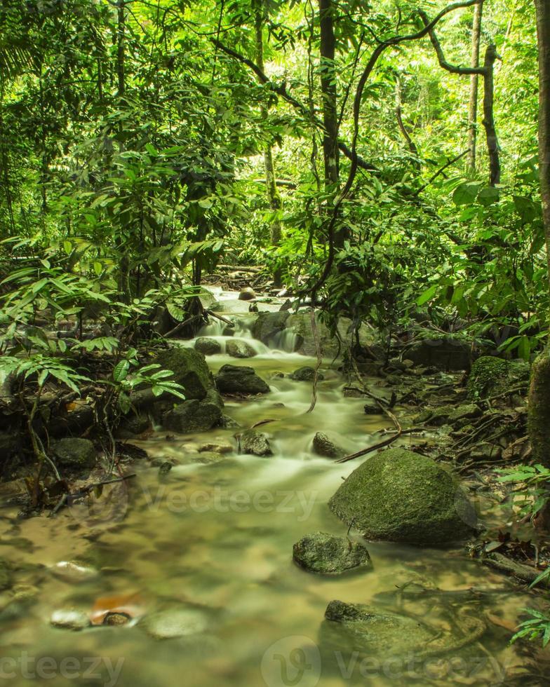 lugn ström i tropisk regnskog foto