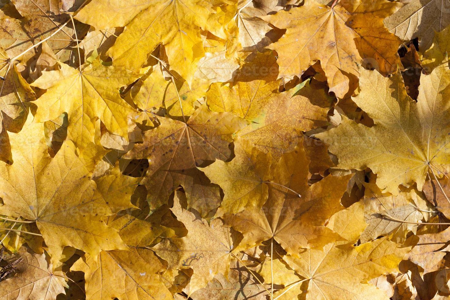 höstblad färgrik höstbladbild som bakgrund foto