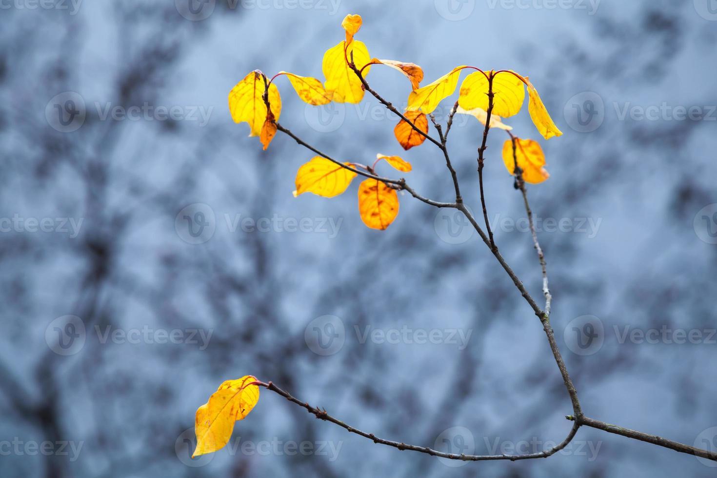höstliga gula löv på kustnära träd med reflektioner foto
