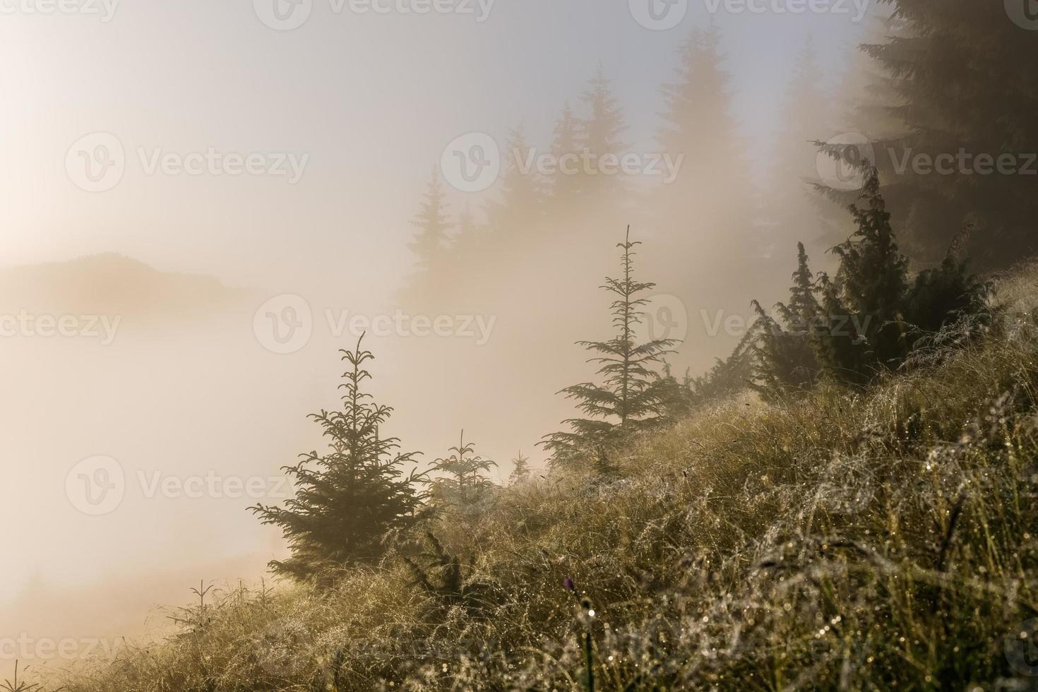 gräset i sluttningarna täckt av dagg och dimma foto
