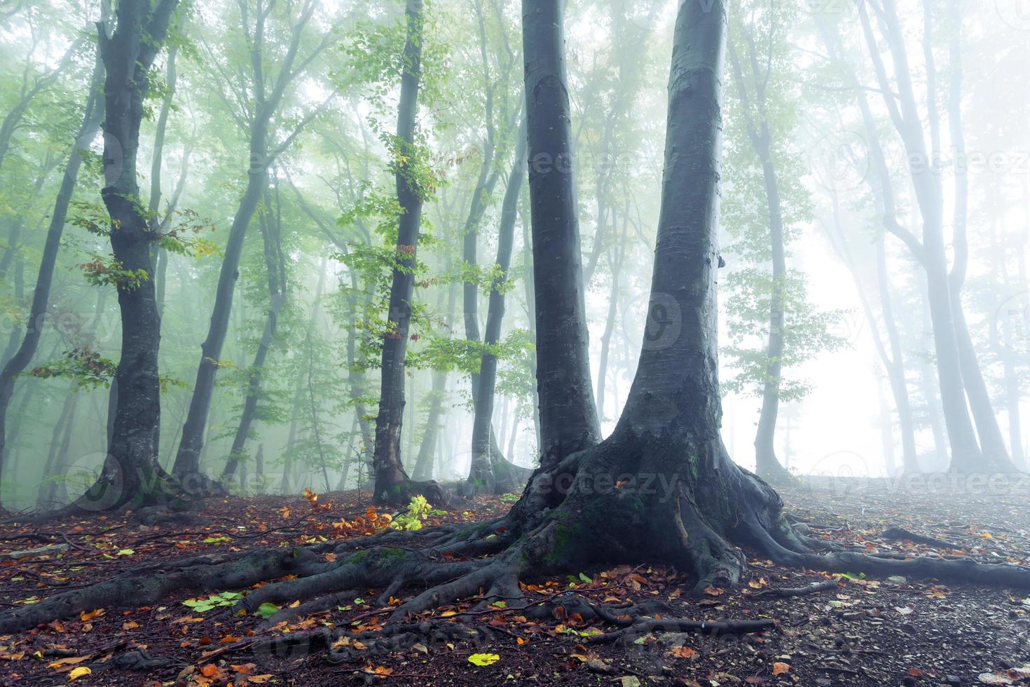 livets rötter i dimman foto
