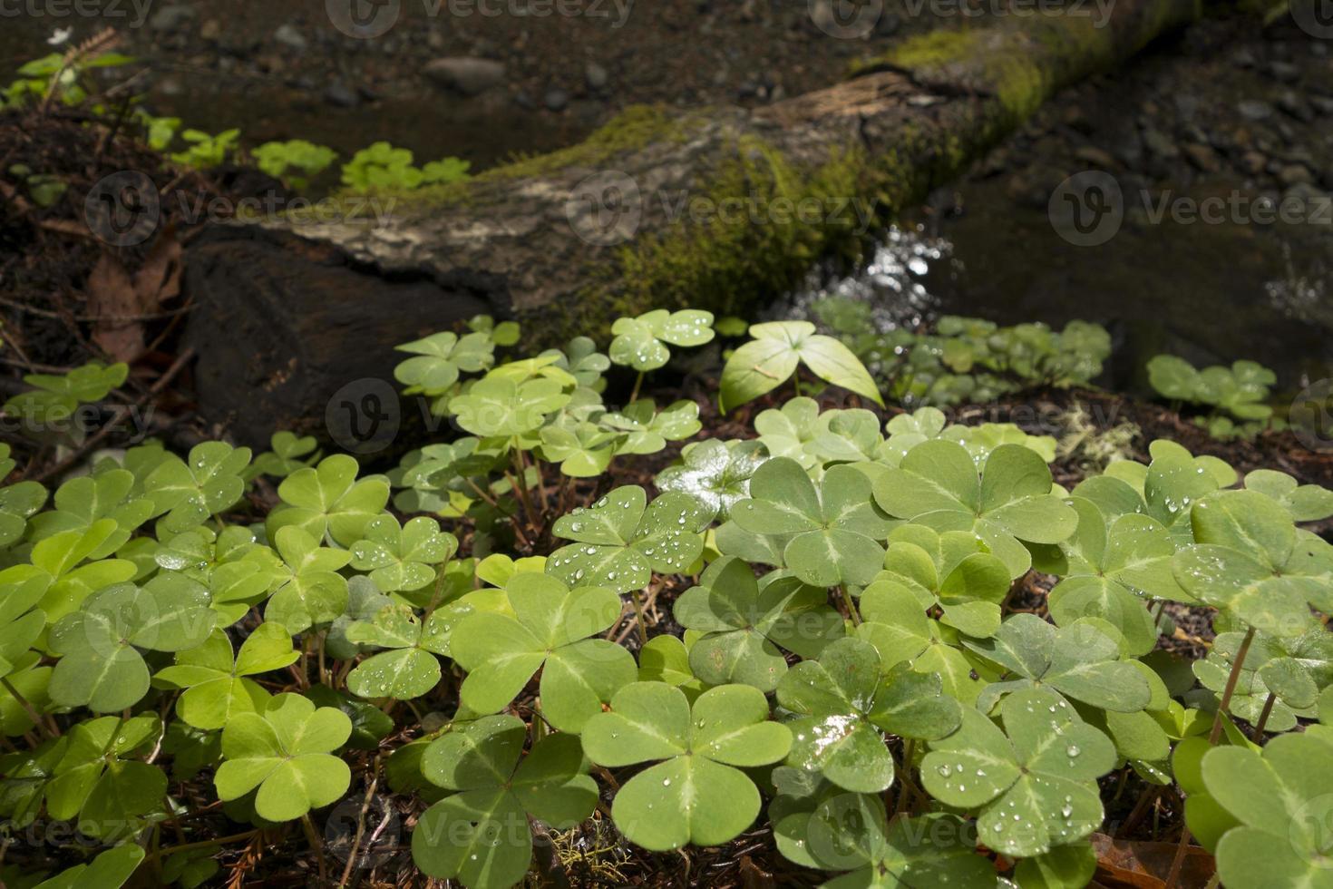 närbild av växter i muir woods foto