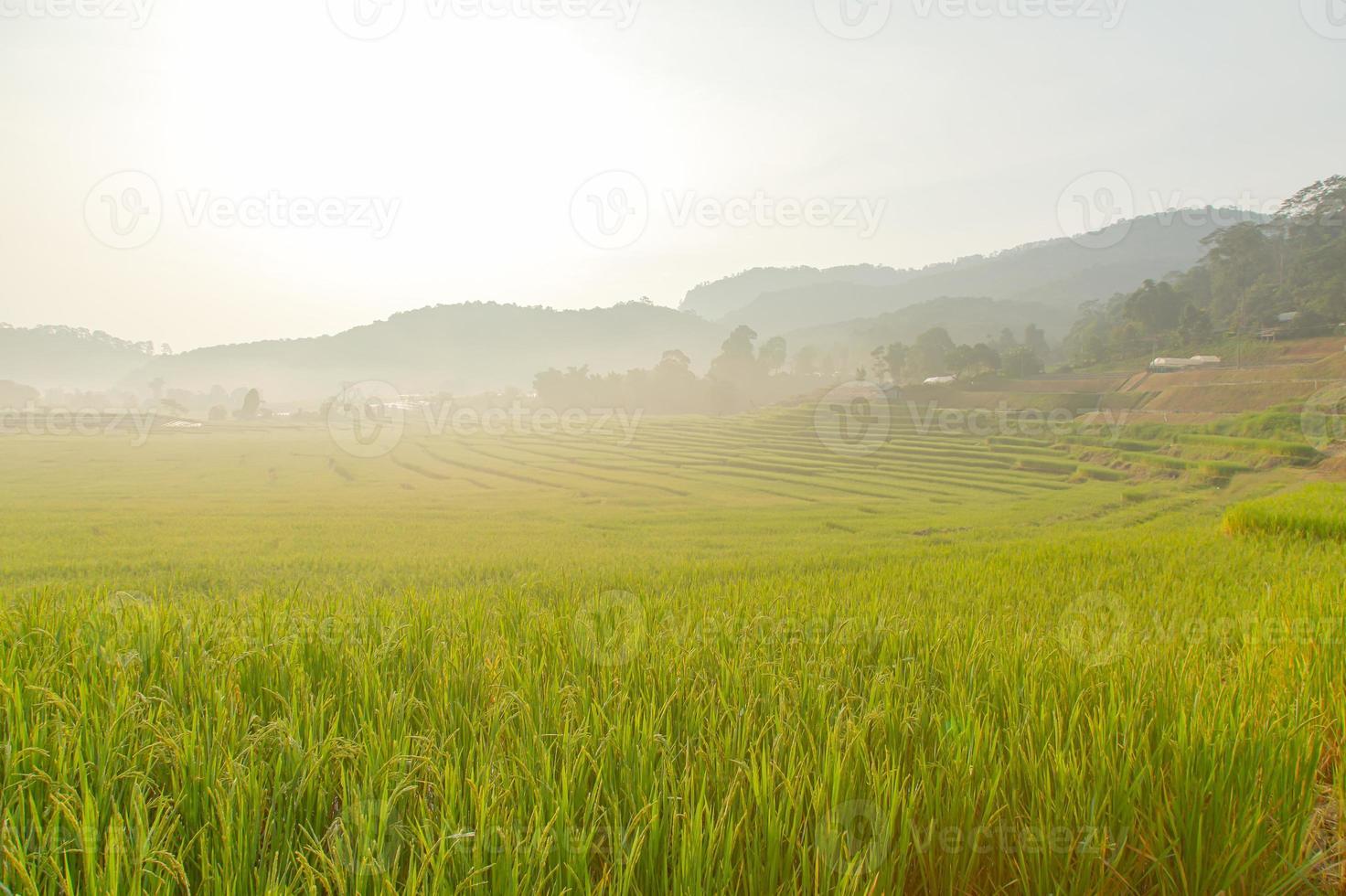 risfält på berg. foto