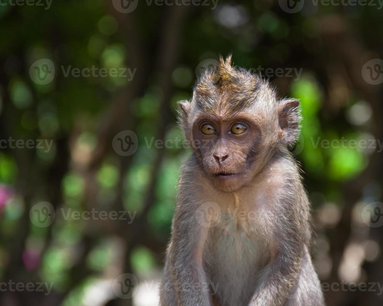 apa i uluwatu-templet foto