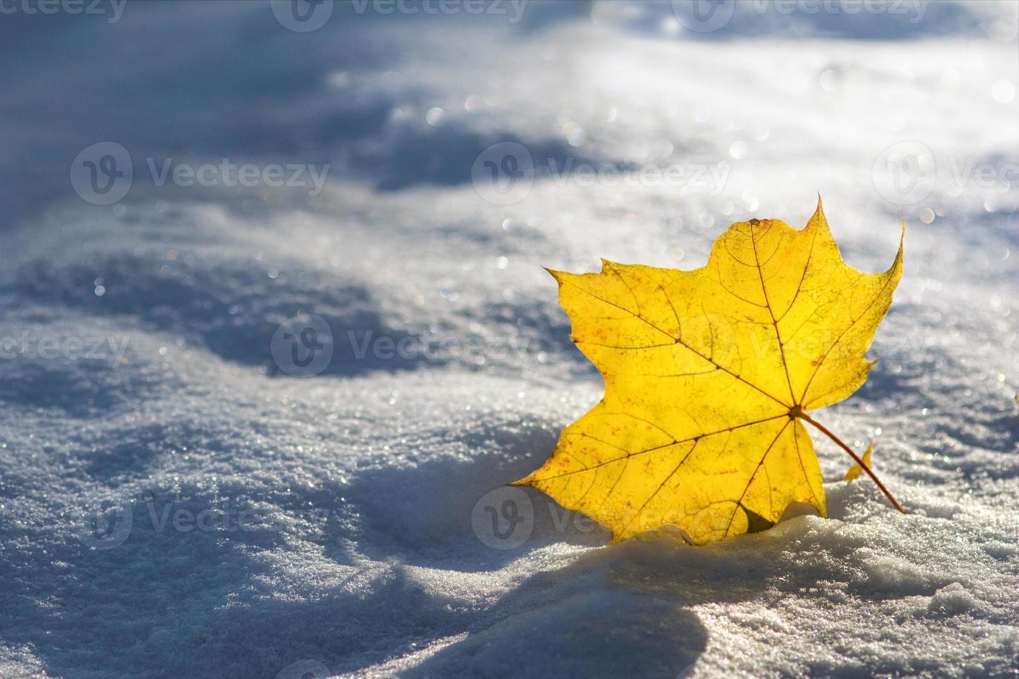 närbild av blad på den första snön i starkt solsken. foto