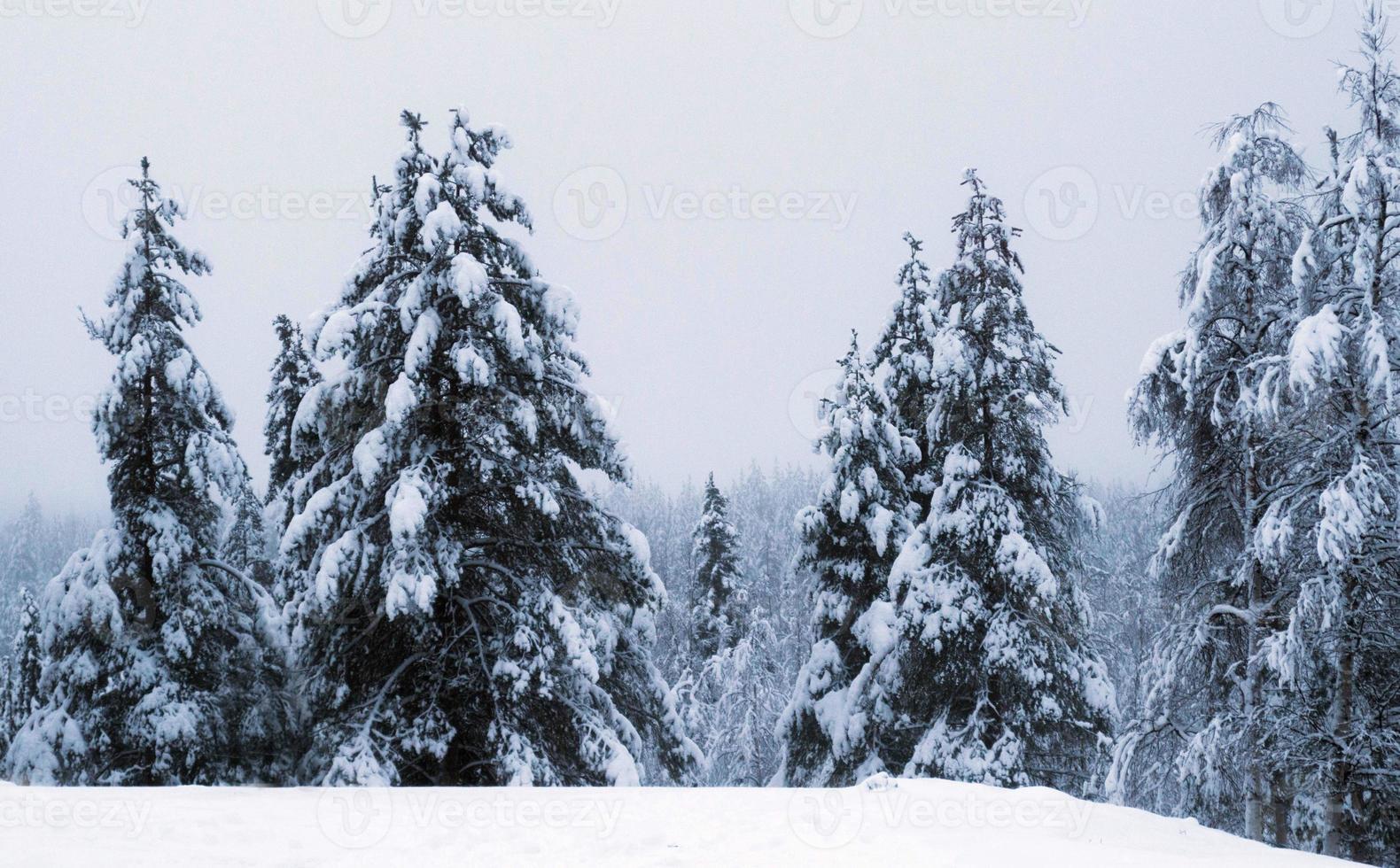 snöig julplats foto