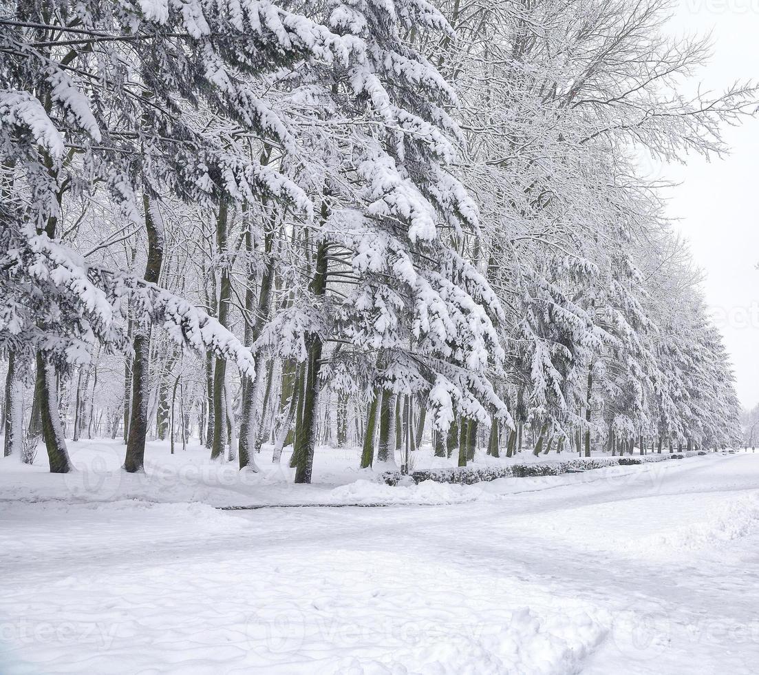 snötäckta träd i stadsparken foto