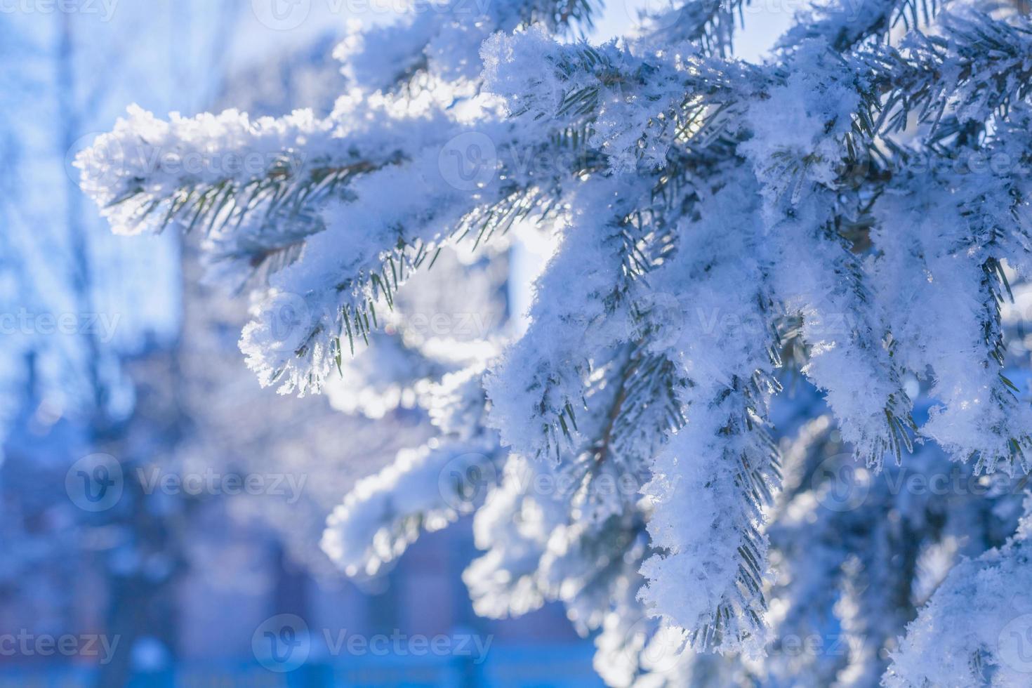 trädgrenar täckta med snö foto