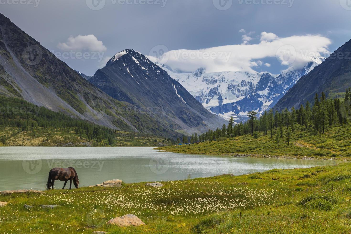 bergslandskap med betande hästar foto