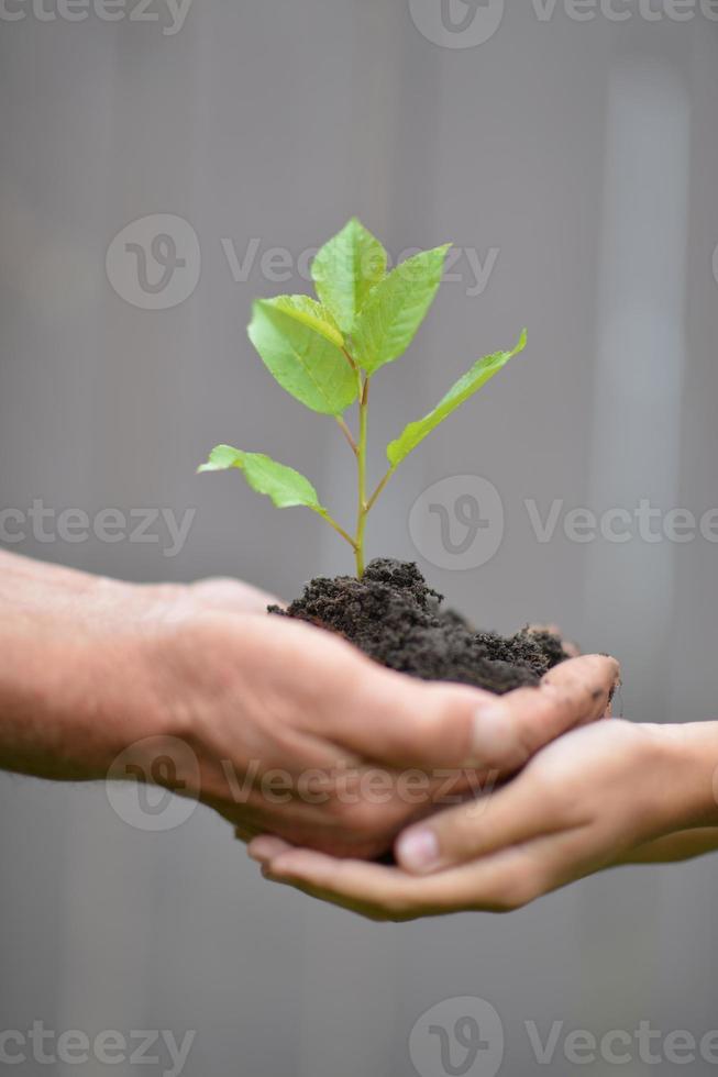 håller ett ungt träd foto