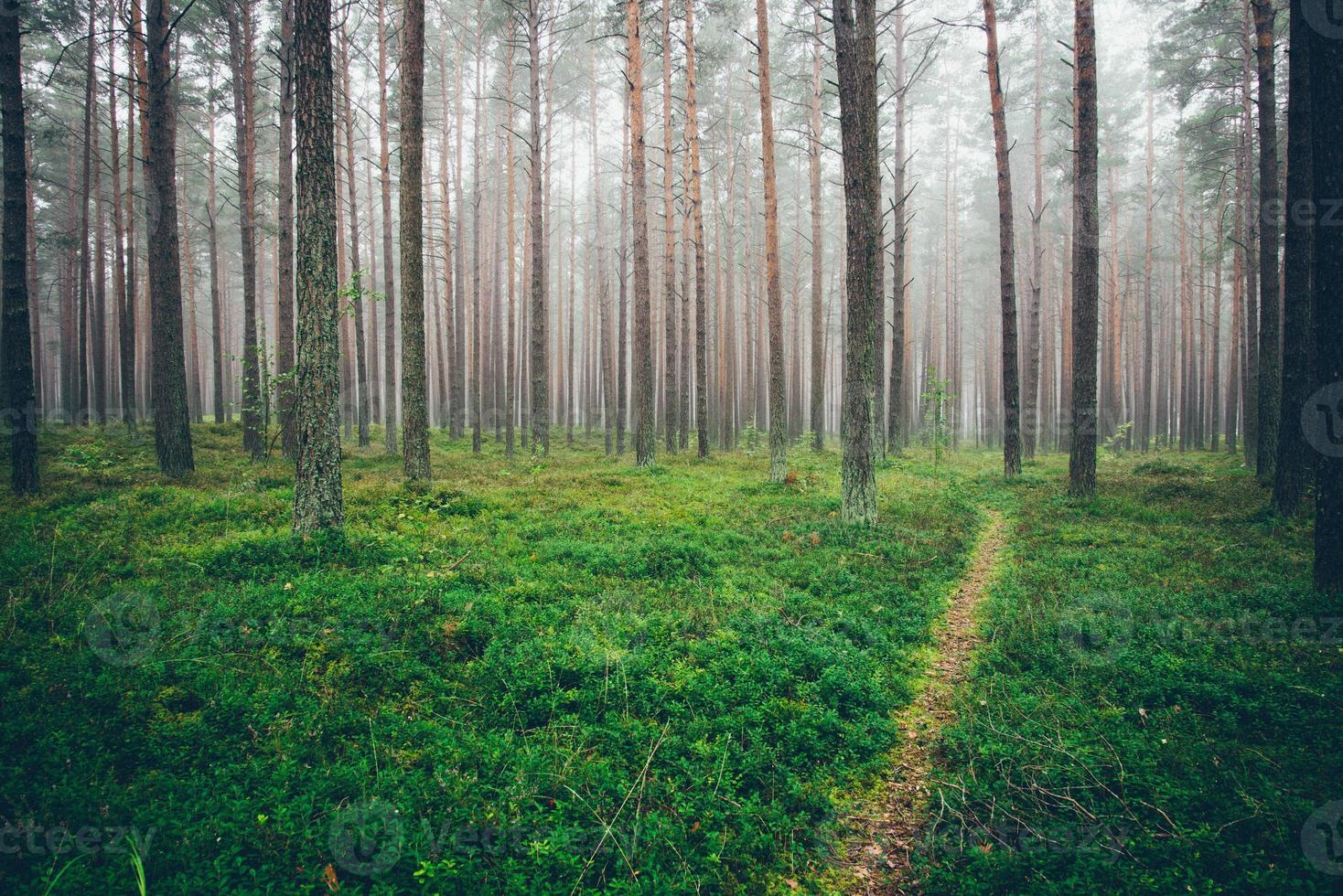 dimmig morgon i skogen. retro kornig film utseende. foto