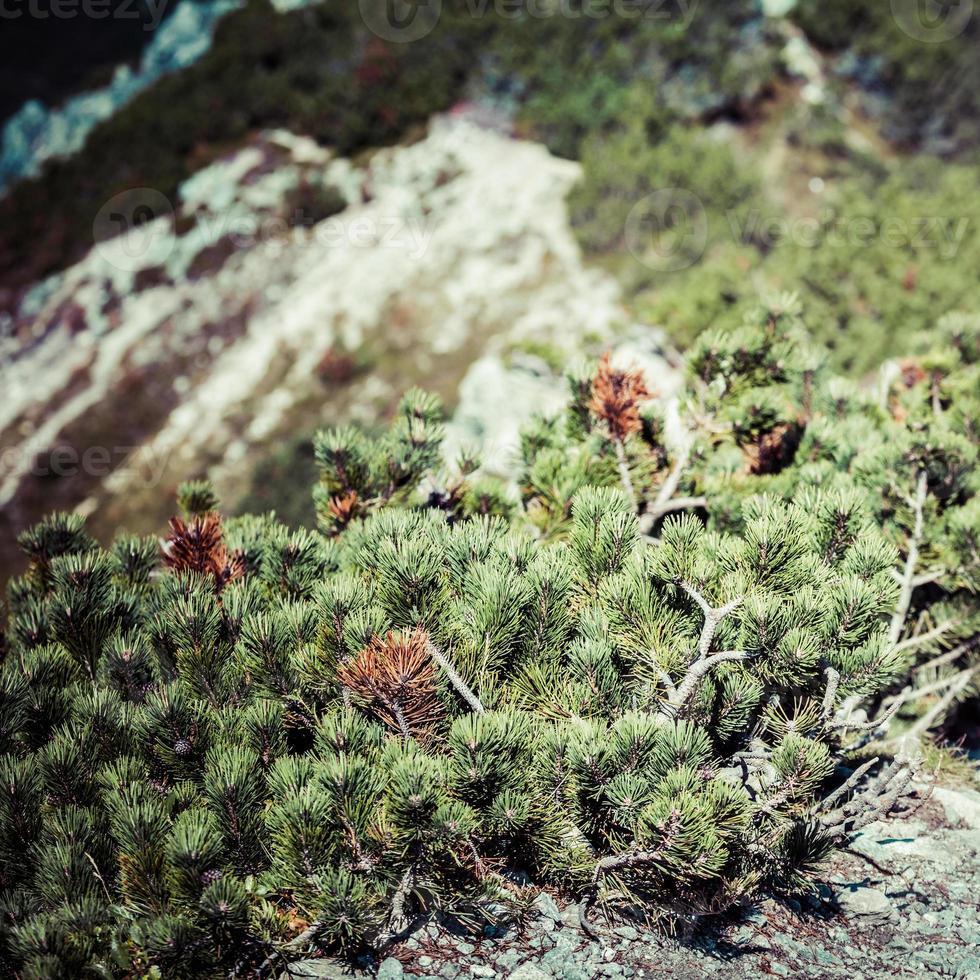 utsikt över tatrabergen från vandringsled. polen. Europa. foto