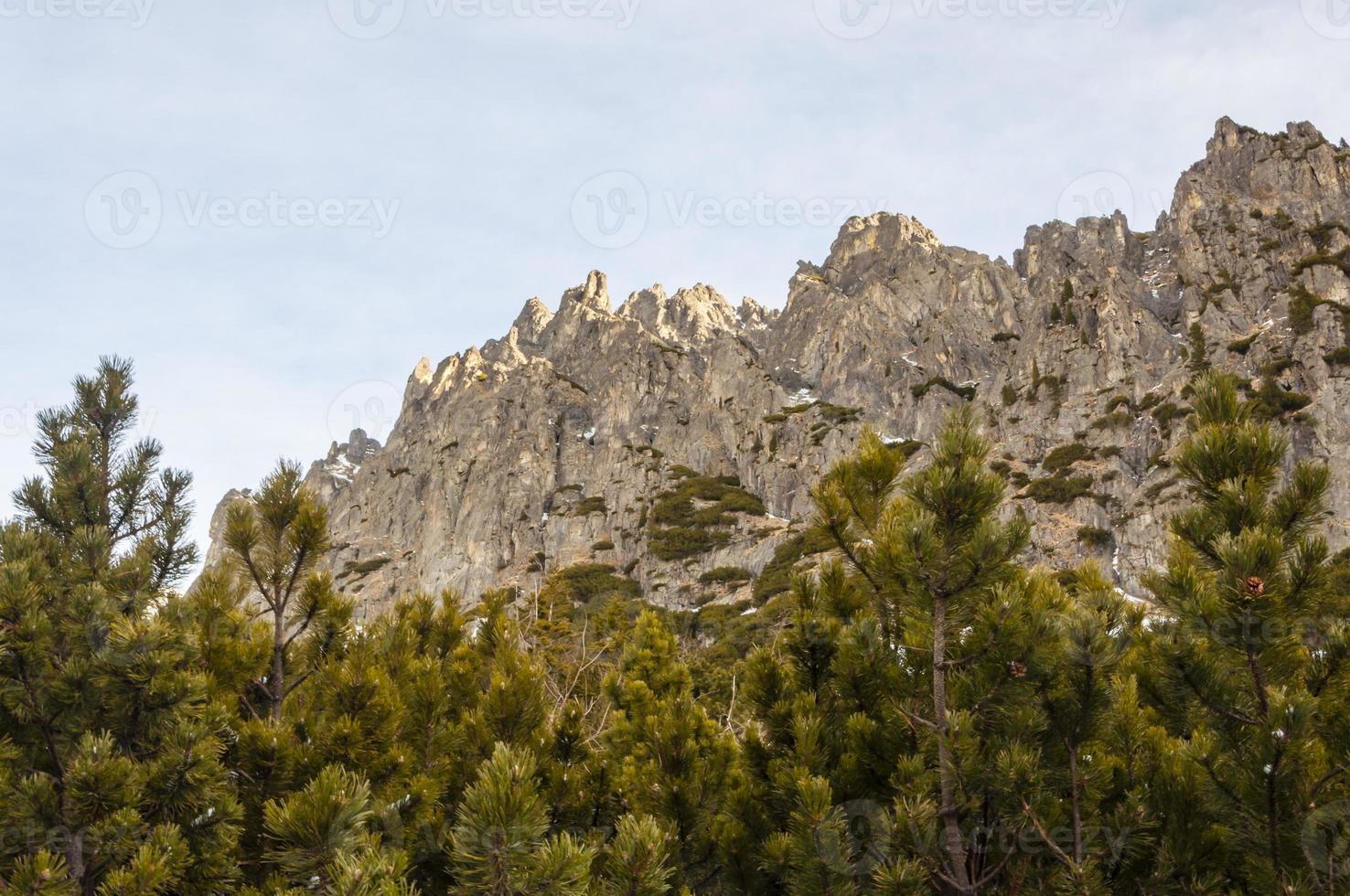 klippvägg ovanför dvärg furu foto