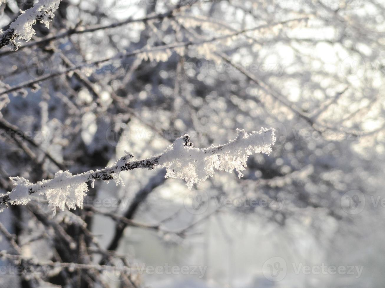 is och snötäckt gren foto