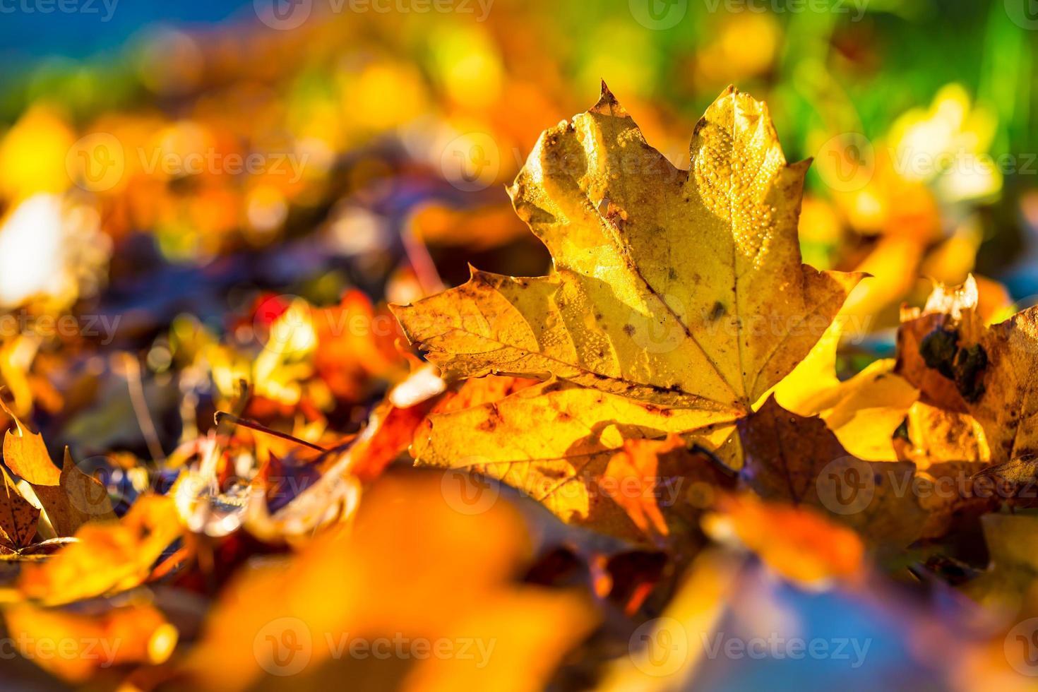 höstlöv i höstfärger och ljus foto