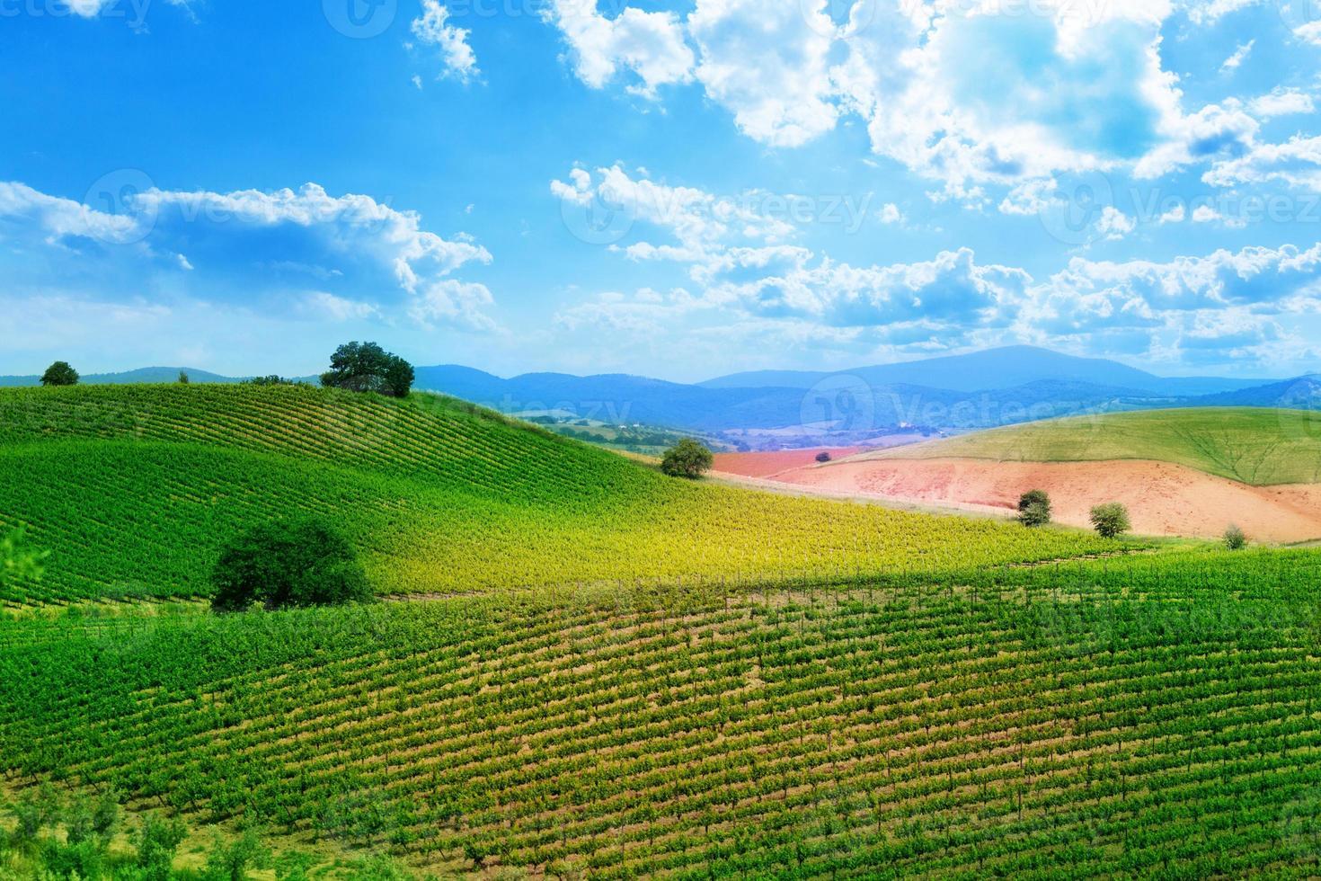 grönt fält med växter i Toscana, Italien foto