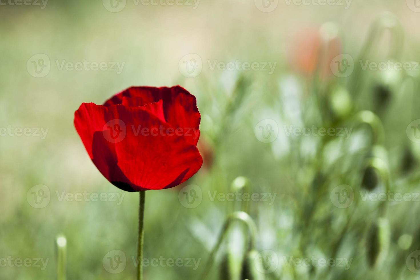blommabakgrund foto