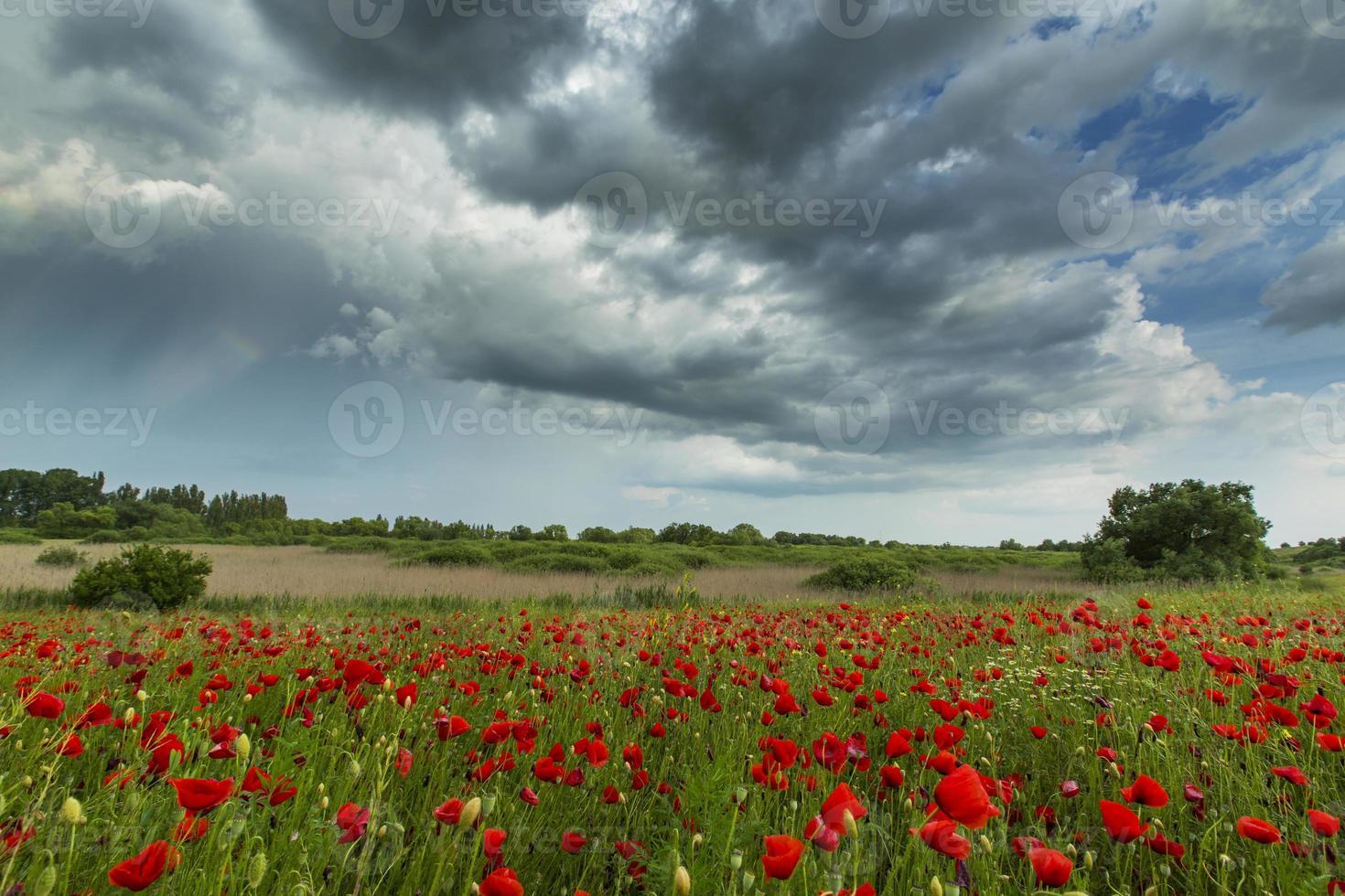 vackra lantliga fält på sommaren foto