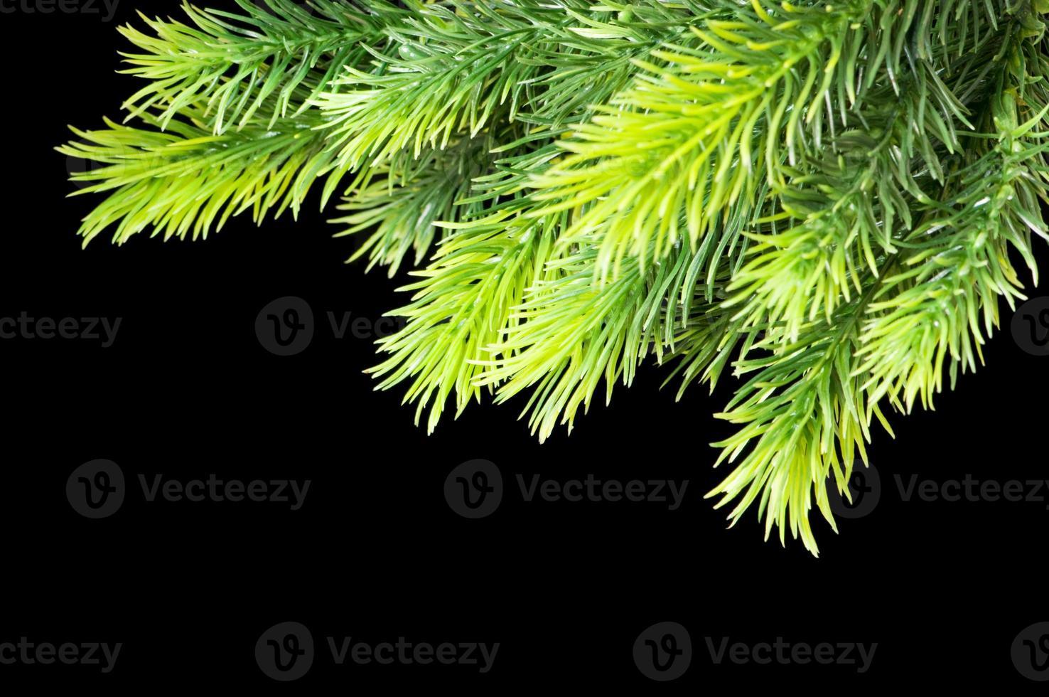 julgran isolerad på den svarta bakgrunden foto