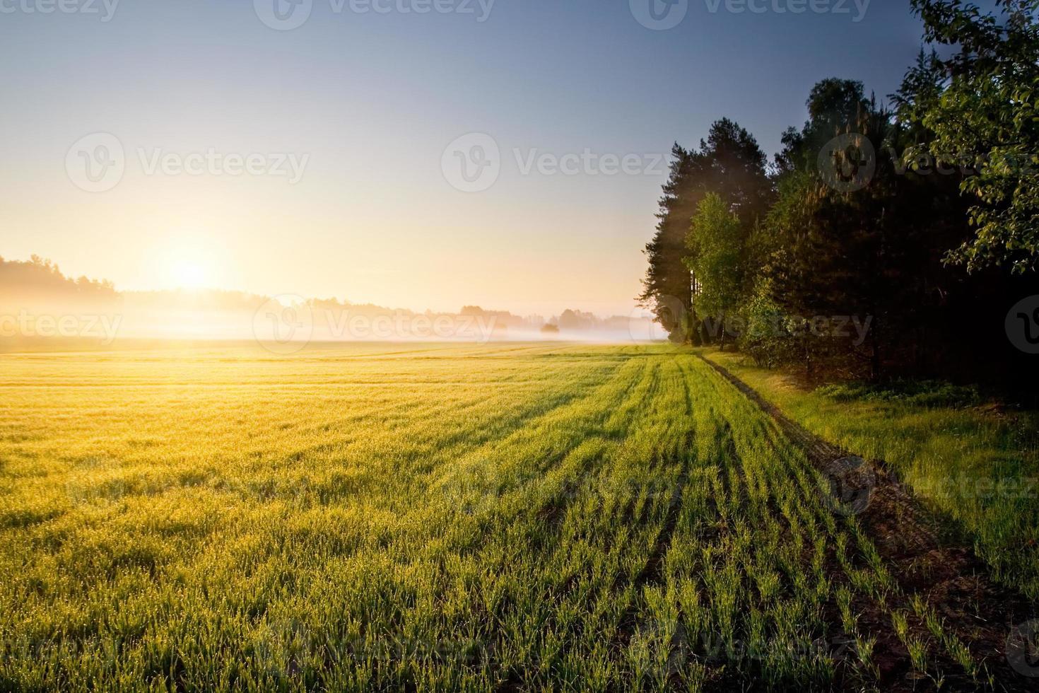vacker soluppgång på dimmig äng foto