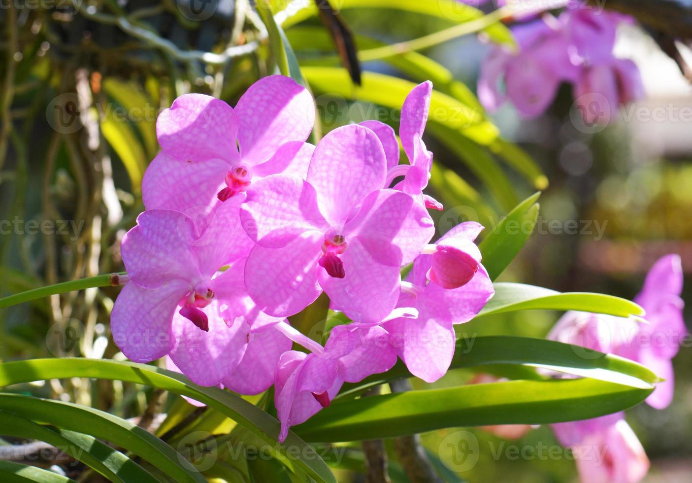 bukett med rosa blommor orkidéer foto