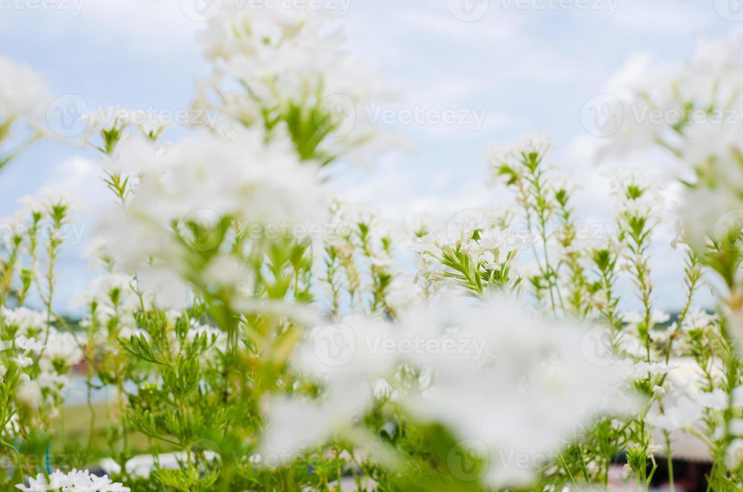 vilda små blommor foto