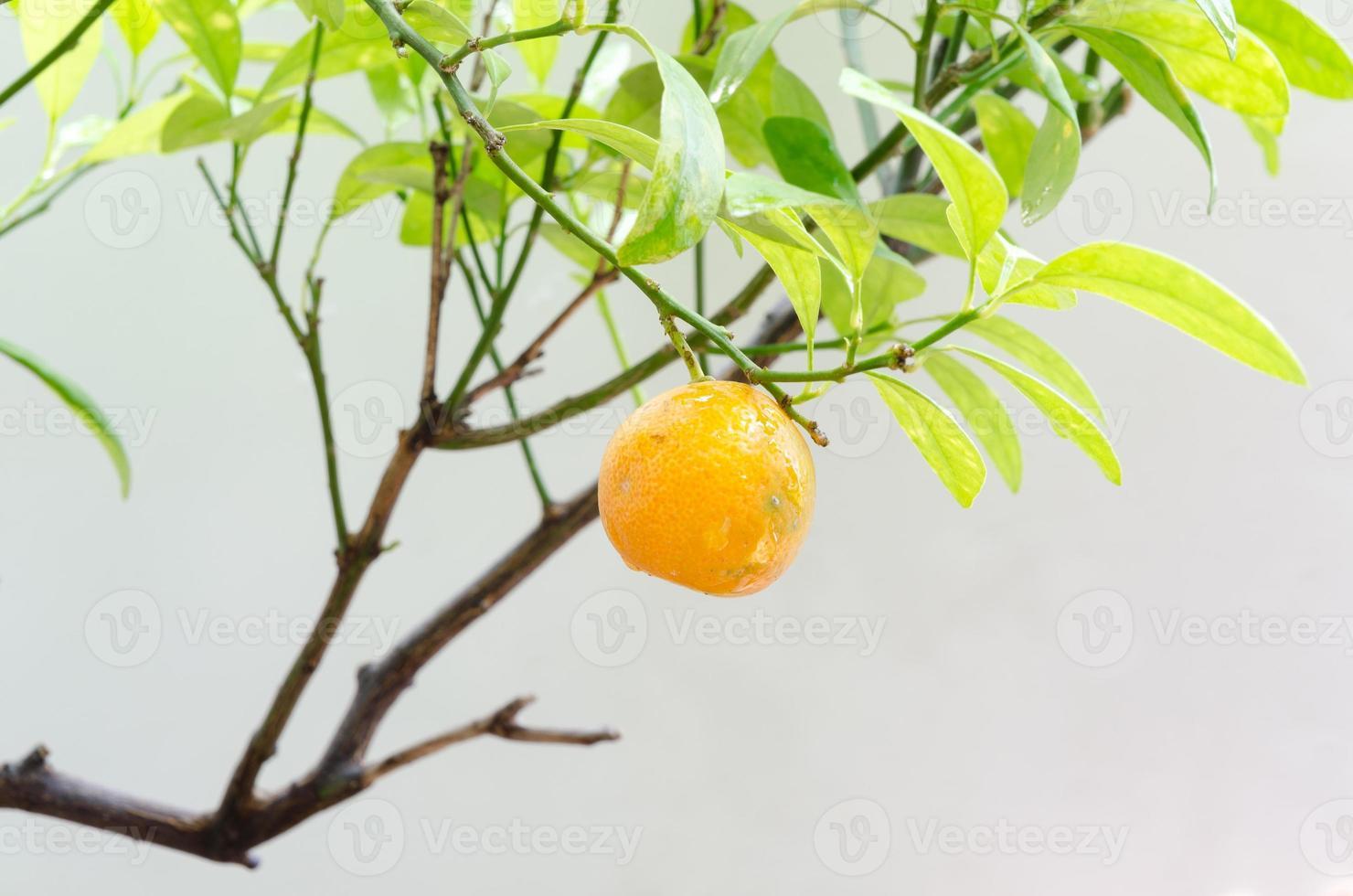 apelsin och vattendroppe foto