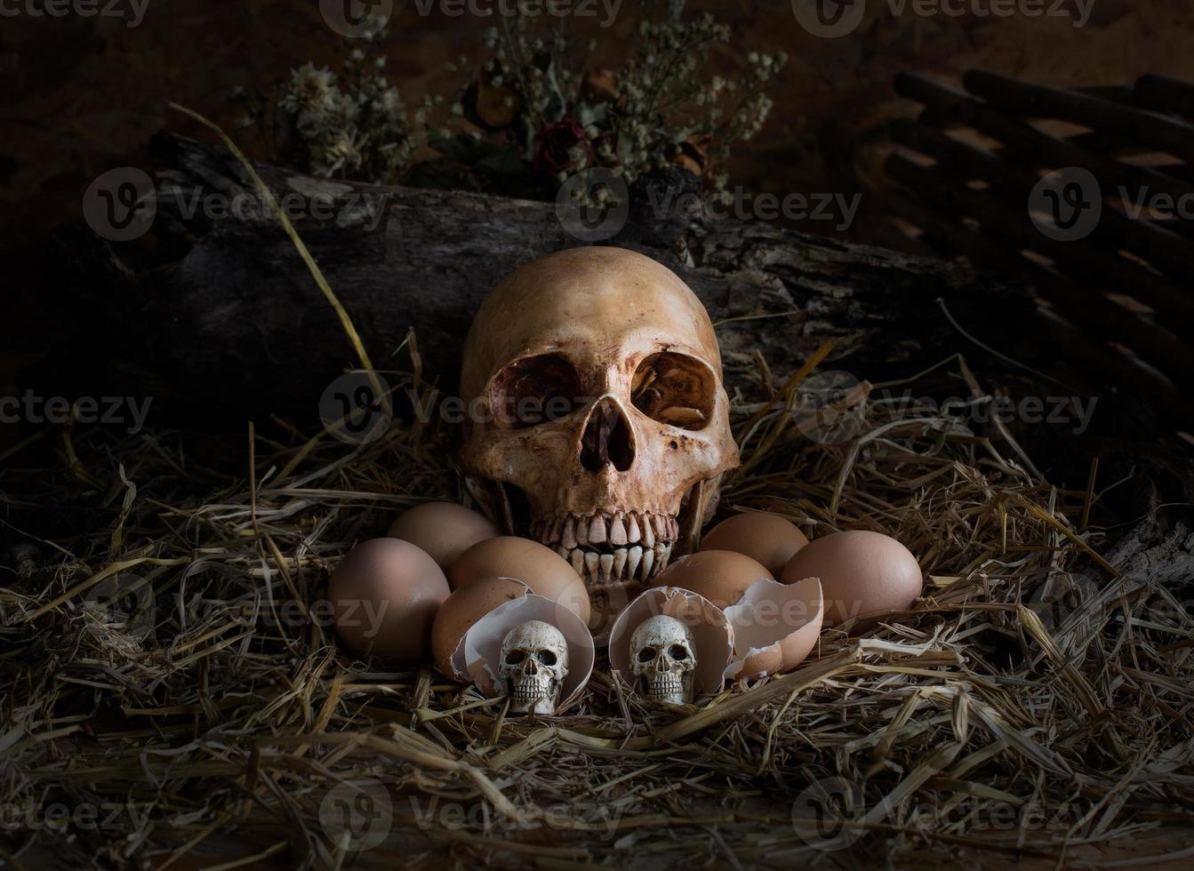 skalle och ägg i halmboet, foto