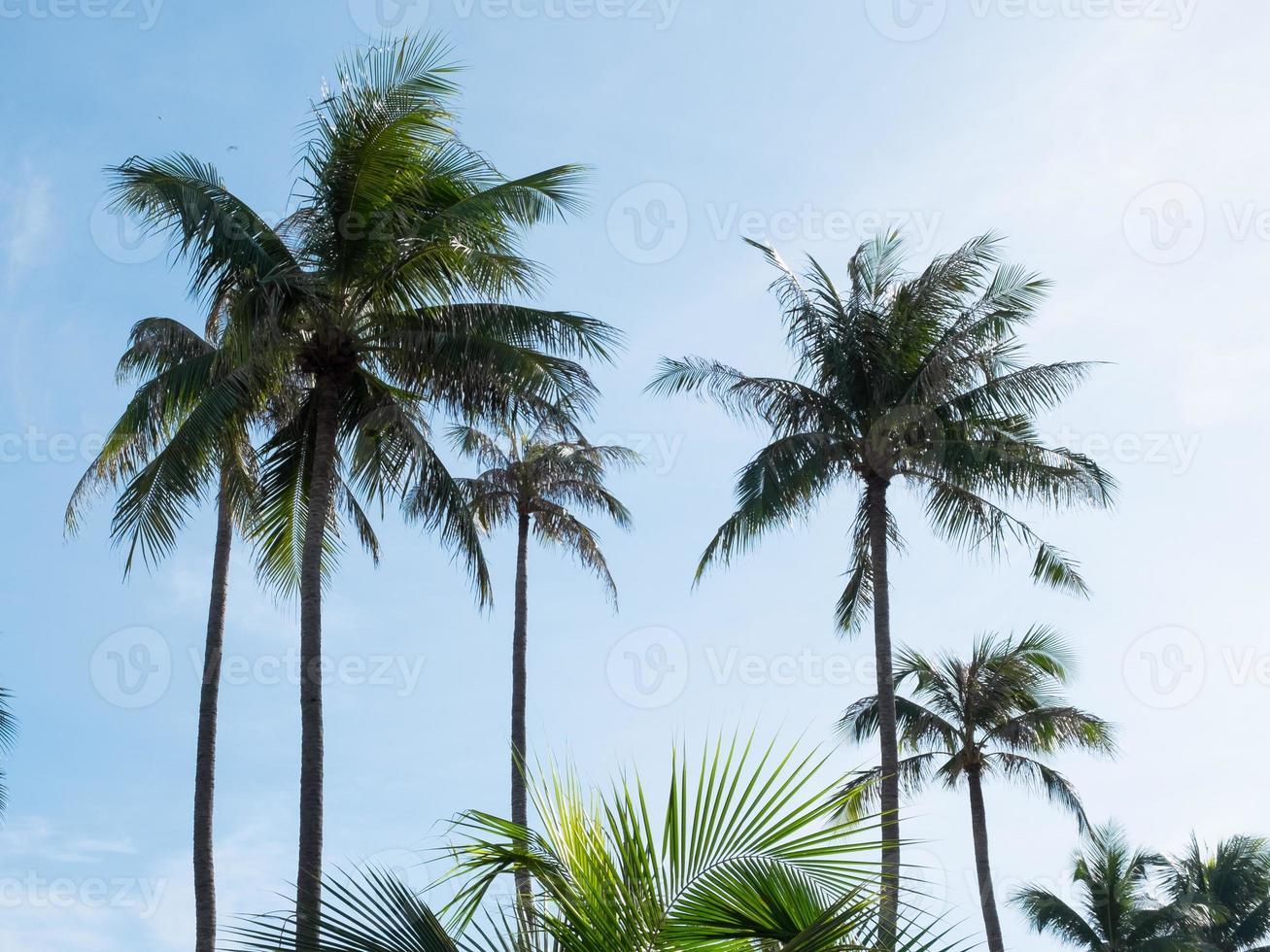 kokospalmer och blå himmel foto