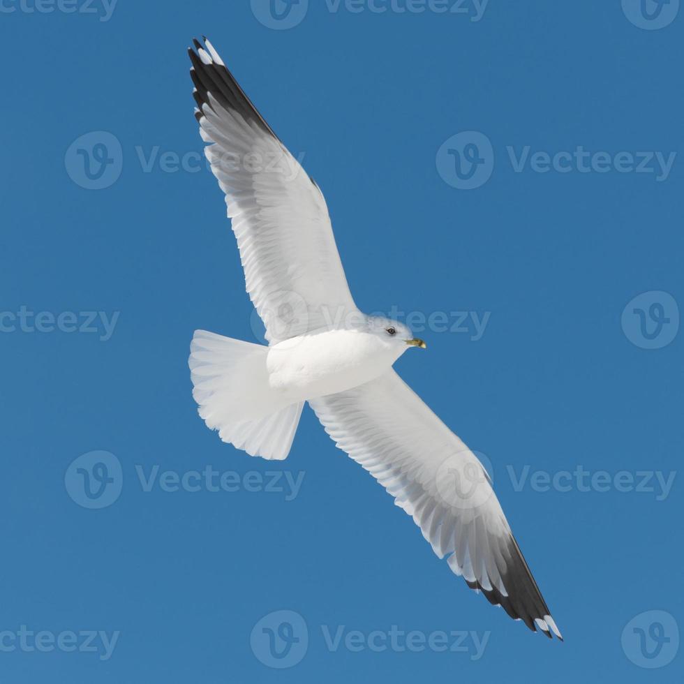 vit fågel flyger på blå himmel foto