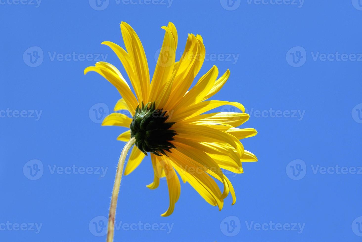 gul blomma och ljusblå himmel foto