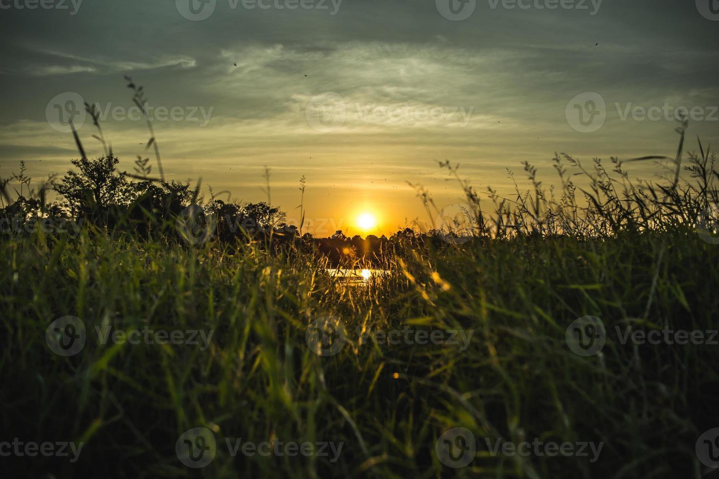 gröna gräs med solnedgång och blå himmel. foto