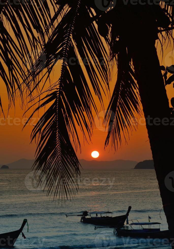 solnedgång med palmblad. foto