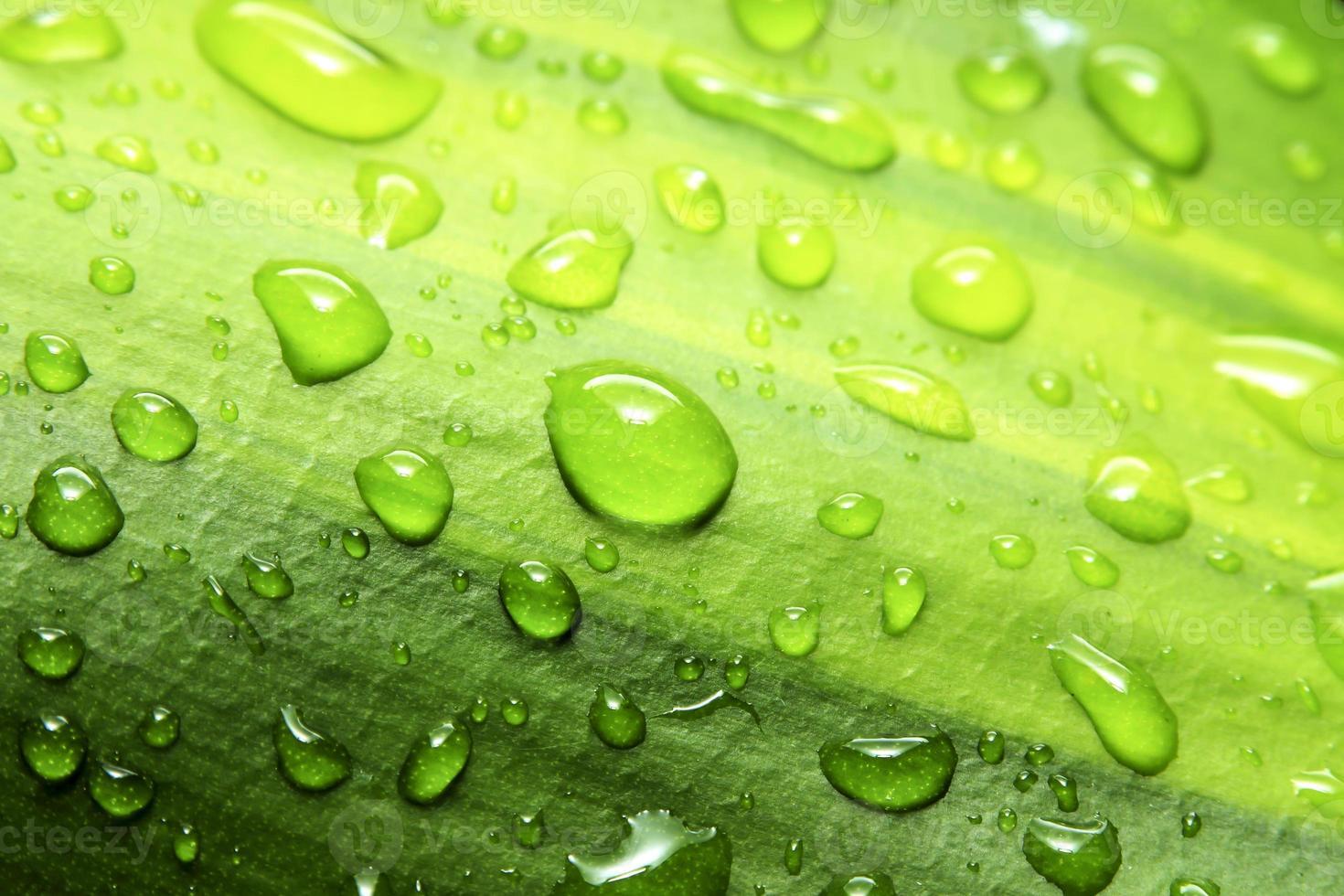 vattendroppar. foto