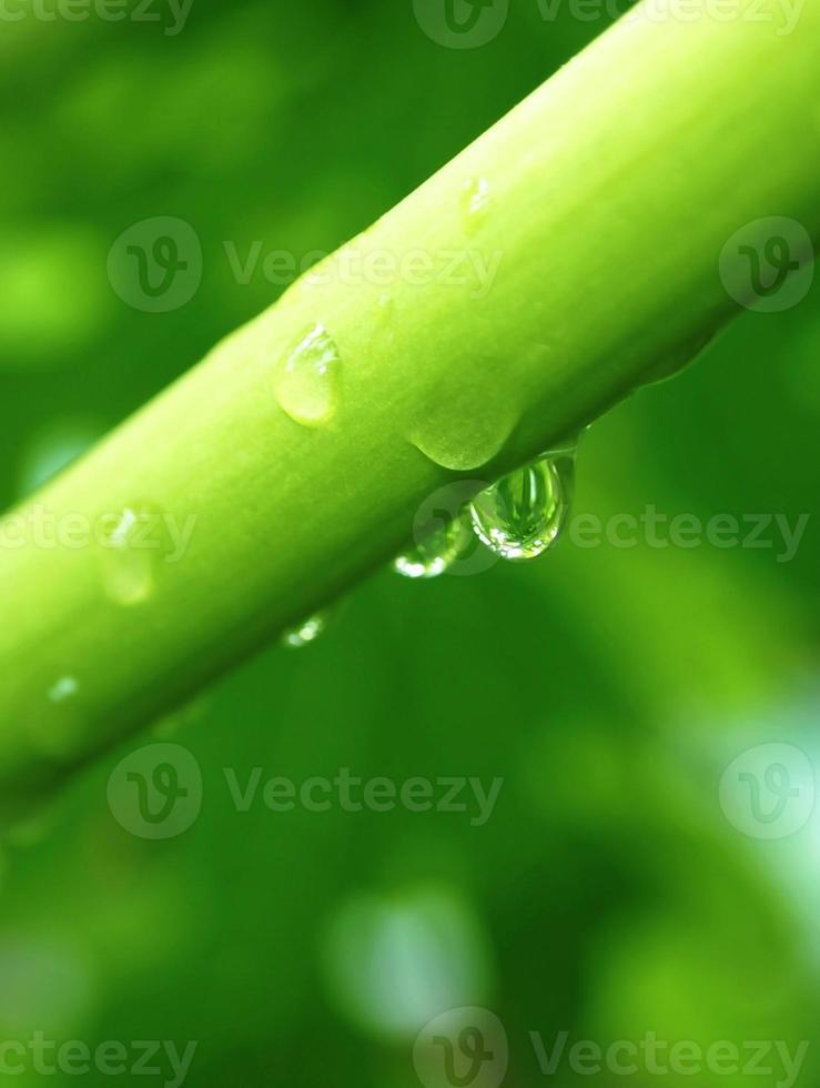 vatten droppe gren foto