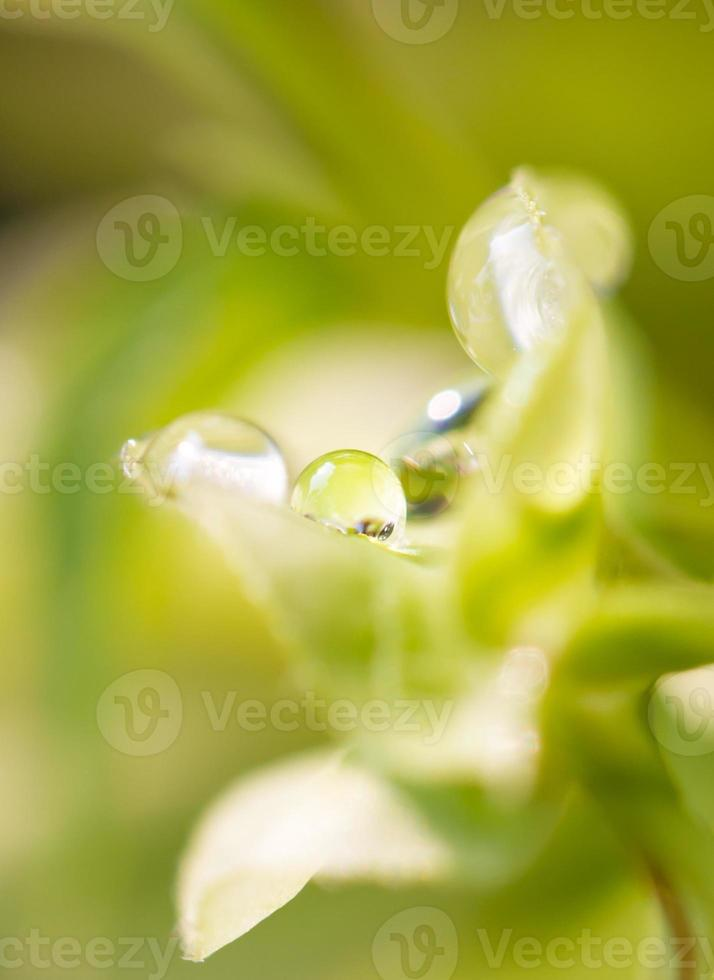 vattendroppbakgrund foto