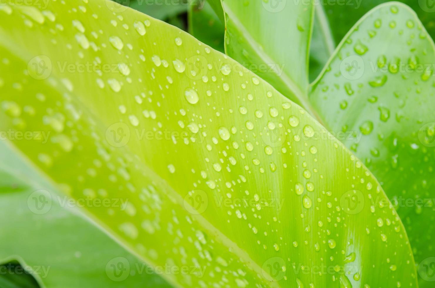 vattendroppar på ett grönt blad foto